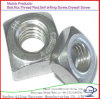 Hot DIP Galvanized/Stainless Steel304/Carbon Steel Square Nut/DIN 557