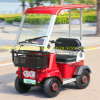 500W/650W Electric Vehicle with Roof and Ce