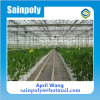 Wholesale PC Sheet Greenhouse for Agriculture