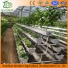 Hydroponics System for Colorful Pepper Agricultural Greenhouse