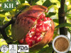 Pomegranate Extract Reducing The Risk of Heart Disease