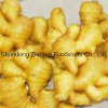 New Fresh Ginger with Good Price