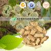 High Quality Herb Medicine Coasiai Giehnia Root