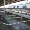 Livestock Farm Equipment Hot Galvanized Cattle Stall