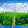 Asia Style Multi Span Poly Greenhouse Tunnel for Tomatoes
