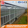 Commercial Steel Structure PC Sheet Greenhouse for Vegetable