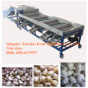 Vegetable and Fruit Sorting Machine/Grading Machine