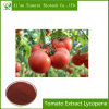Factory Supply 100% Organic Tomato Extract Lycopene 98% Powder