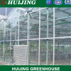 Hydroponic Venlo Multi-Span Tunnel Planting Tomato Vegetables Polycarbonate PC Sheet Agricultural Greenhouse for Farming/Flowers/Tomato