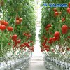Best Selling Po/PE Film Tunnel Greenhouse with Cooling Wall
