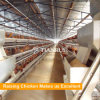 A Type Automatic Chicken Layer Cage designed equipment for poultry farm