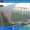 Single Span Film Agricultural Greenhouse for Cucumber