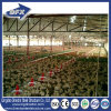 Good Quality Trade Assurance Chicken Poultry Farm Shed