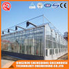 Agriculture Multi-Span Garden Tempered Glass Greenhouse