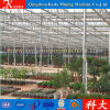 Galvanized Pipe Economic Tunnel Flower Greenhouse for Sale