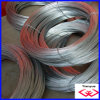 Electro Galvanized Wire (TYD-071)