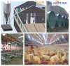 Main Feeding System in Poultry House for Layer Broiler with Installation