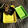 Custtomed Colorful Disposable PP Plastic Food Grade Fruit Tray