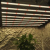 High Ppfd 650 Watt Samsung Lm301b Diode 3500K Inventronics Driver Plant LED Grow Light for Covering 5X5 Footprint