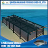Floating Abalone Farms Cage