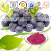 Natural and Food Beverage Grade Instant Blueberry Powder