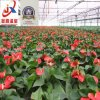 High-Grade and Beautiful Flower Greenhouse
