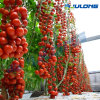 Agricultural Polytunnel Film Greenhouse with Good Installation Service for Tomato Planting