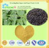 Health Care Products Ingredients Natural Malaytea Scurfpea Fruit Extract / Psoralea Corylifolia / 5% Psoralen