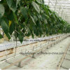 White PE Woven Ground Cover Weed Control Mat for Greenhouse