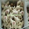 Quality Wholesale Anqiu New Crop Dehydrated Fresh/Dried Air Dry Ginger, Pickled Peeled Garlic Gengibre Ginger Price