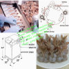 New Style Shrimp Peeling Machine for Hotel Restaurant
