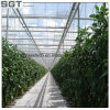 4mm-19mm Low Iron Tempered Glass for Greenhouse