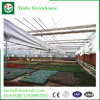 China Commercial Wholesale Hydroponics System for Greenhouse