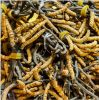Factory Price High Quality Wild Cordyceps Sinensis Extract