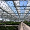 Commercial Holland Max Air Greenhouse with Open Roof for Flower Farming