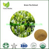 Green Tea Extract Bulk 98% Tea Polyphenol