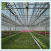 Best Price Polycarbonate Affordable Greenhouse Glazing