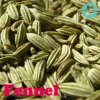 Fennel Extract / Foeniculum Vulgare Extract