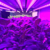 T8 LED Aluminum Body Material Plant Growing Lamp for Plant