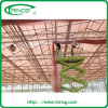 Polycarbonate greenhouse for flowers