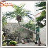 China Manufacturer Outdoor Artificial Coconut Palm Plant Tree