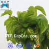 100% Natural Mulberry Leaf Plant Extract