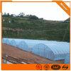 Agriculture/Farm/Multi-Span/Single-Span/Tunnel Plastic Film Greenhouse for Lettuce/Chili/Cucumber/Tulip