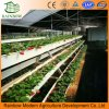 Reusable PVC Planting Groove Soilless Culture for Strawberry Planting