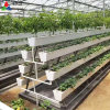 Customized Vertical PVC Plant Growing Gutter for Hydroponics