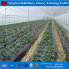 Multi Span/Single Span Greenhouse Plastic Film Greenhouse for Tomato