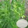 Natural Sweetner: Stevia P. E.
