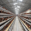Automatic Cage System Poultry Farm Layer Chicken Cage for Sale