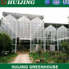 Hydroponic Polycarbonate PC Sheet Venlo Tunnel Multi-Sapn Agricultural Greenhouse for Farming/Vegetables/Crop/Tomato/Agriculture