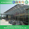 Popular Long Life-Span Venlo Structure Glass Greenhouse